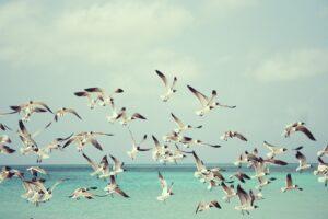 Måger der flyver over havet